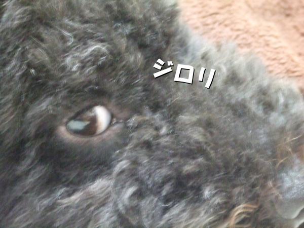 DSCF2573_convert_20120723221451.jpg