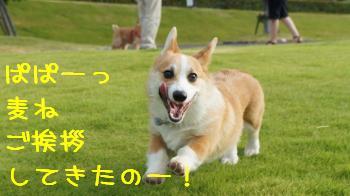 2012092114514707e.jpg