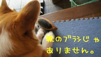 20120925110458c10.jpg
