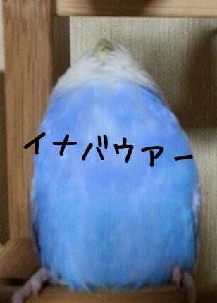fc2_2014-02-18_22-40-54-252.jpg