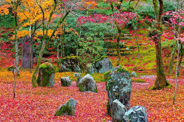 晩秋の光明禅寺の枯山水