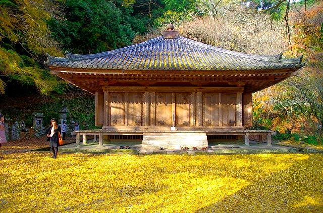黄色い絨毯と国宝富貴寺