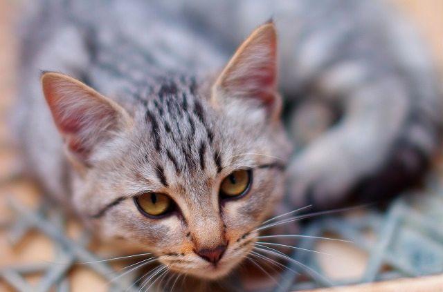 Kitten 3 brother (子猫3兄弟)その後