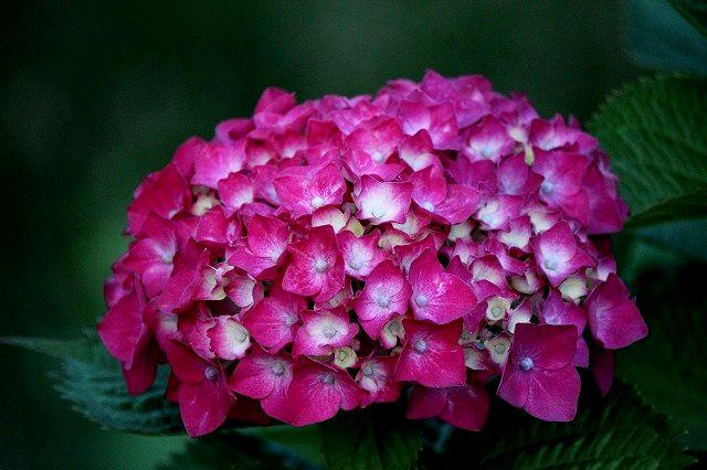 雨に咲く花