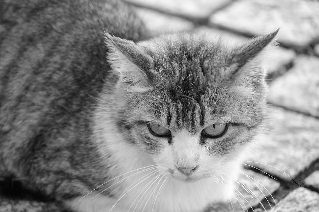 市民公園の猫ちゃん