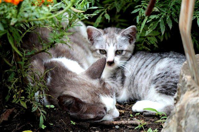 母さん猫は夏バテ中
