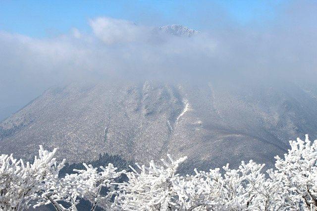 霧氷煌めく鶴見岳