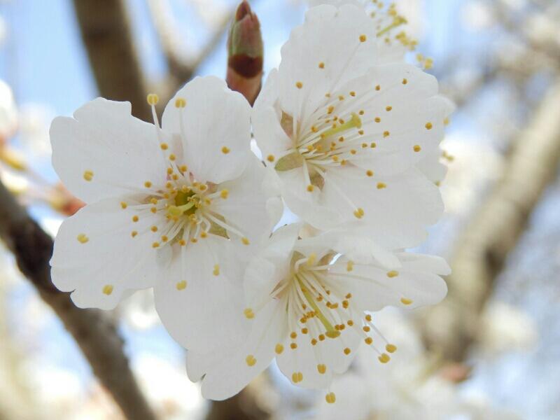 fc2_2013-03-18_07-36-05-164.jpg
