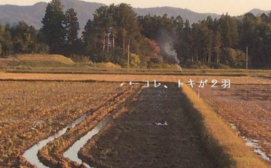 20141025トキとご対面!