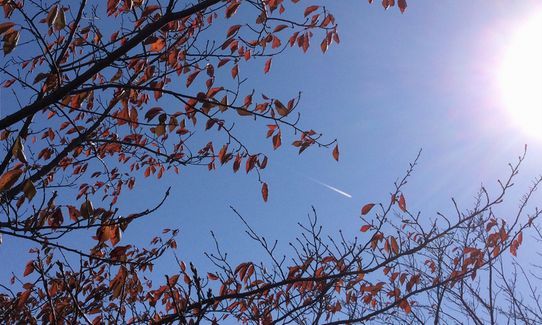 紅葉のムコウにひこうき雲