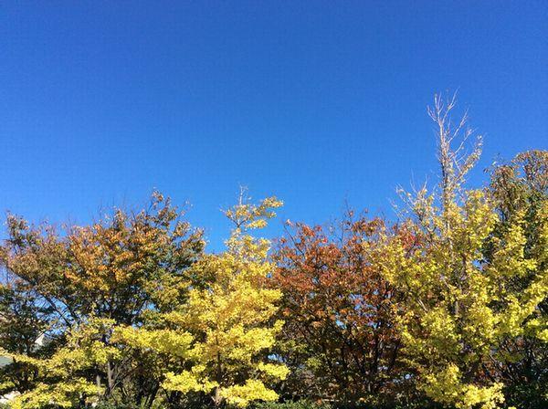 山の下公園の紅葉