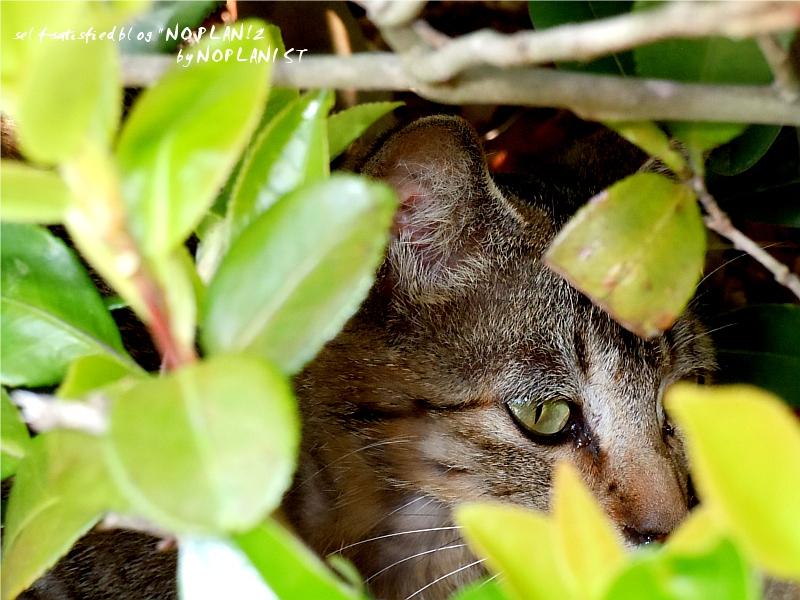 DSCN6295_cat.jpg
