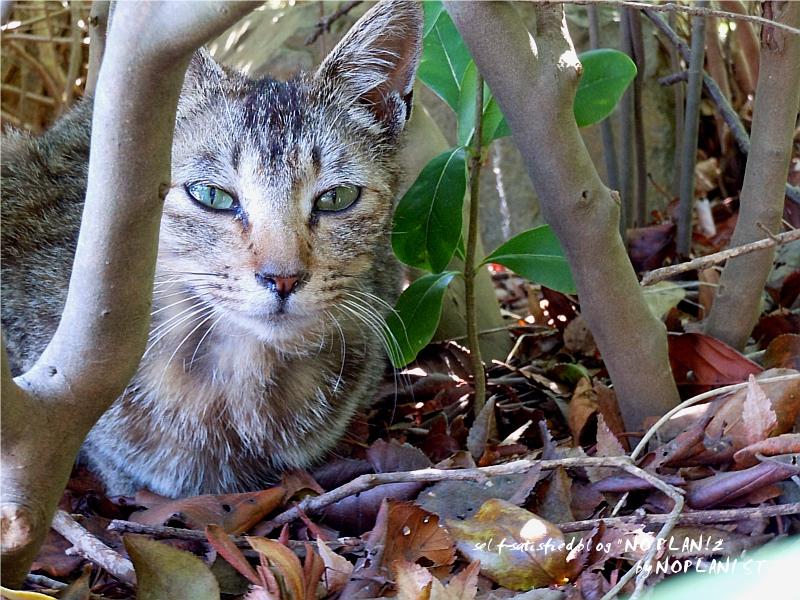DSCN6297_cat.jpg