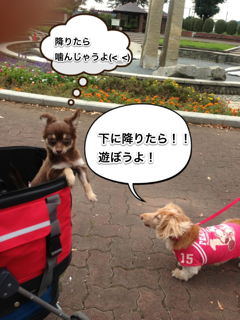 2012101315145384b.png