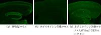 fig1-1201525241.jpg