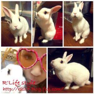 fc2blog_201211070633449a1.jpg