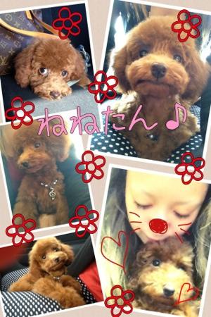 fc2blog_20121107064720513.jpg