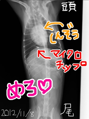 fc2blog_20121109040823f75.jpg