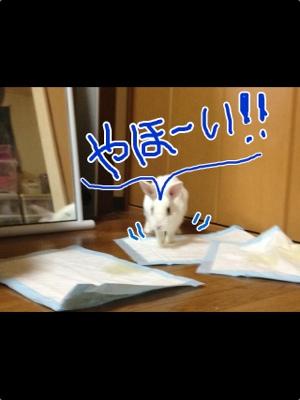 fc2blog_20121117051425f74.jpg