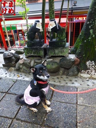 千代保稲荷神社16