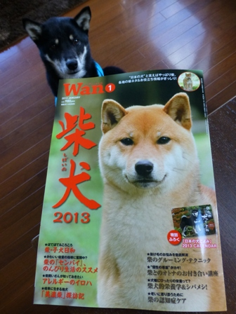 WAN柴犬1