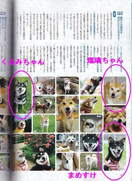 WAN柴犬2
