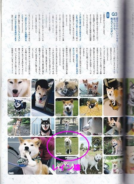 WAN柴犬3