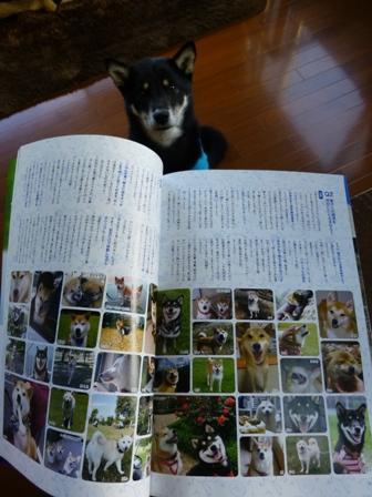 WAN柴犬4