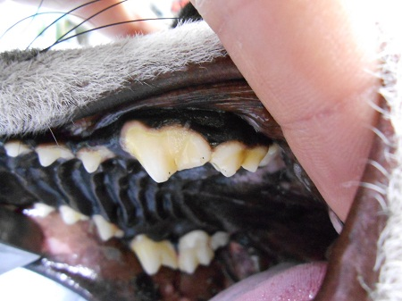 1228歯石除去2