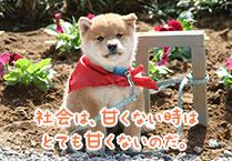 マメシバ一郎フーテンの芝二郎名言2