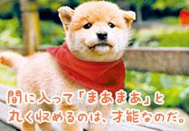 マメシバ一郎フーテンの芝二郎名言3