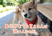 マメシバ一郎フーテンの芝二郎名言4