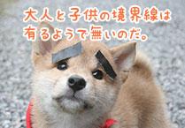 マメシバ一郎フーテンの芝二郎名言5