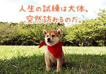 マメシバ一郎フーテンの芝二郎名言9