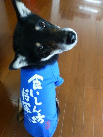 犬屋Tシャツ10