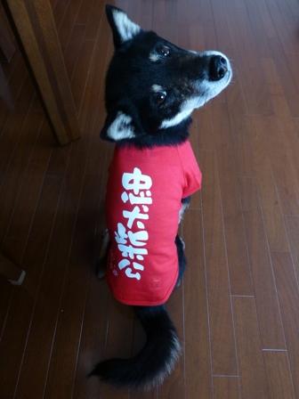 犬屋Tシャツ17