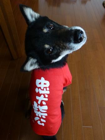 犬屋Tシャツ18