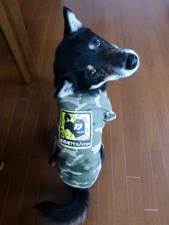 犬屋Tシャツ22