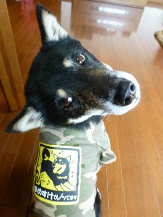 犬屋Tシャツ24