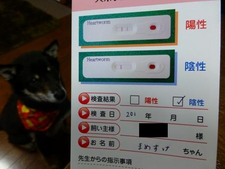動物病院(04052013)13