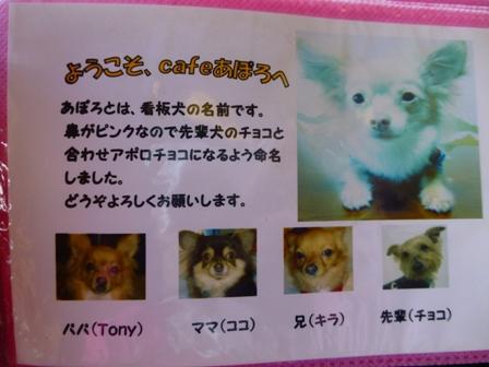 DOGcafe あぽろ11