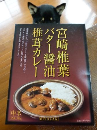 宮崎椎葉バター醤油椎茸カレー1