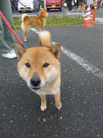 忍者犬変身2