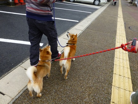 忍者犬変身7