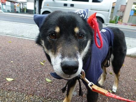忍者犬変身14