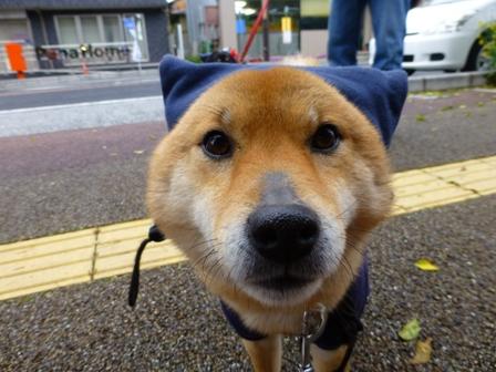 忍者犬変身15