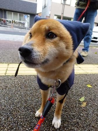忍者犬変身16