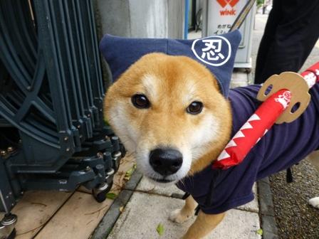 忍者犬変身17