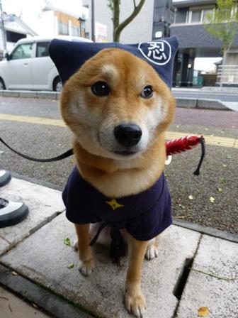 忍者犬変身19