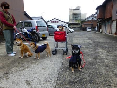 忍者犬変身24